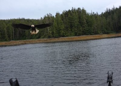 Eagle called in by Captain Gord